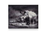 foto op acryl rhino