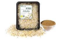 kiem alfalfa