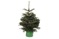nordmann kerstboom in pot