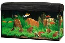 marina aquarium