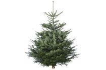 kerstboom nordmann gezaagd 125 150 cm