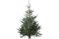 kerstboom nordmann gezaagd 175 200 cm