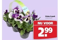 violen 6 pack