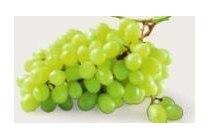 witte druiven