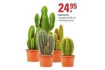 cactus xl