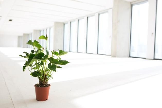 De voordelen van groen op de werkvloer!