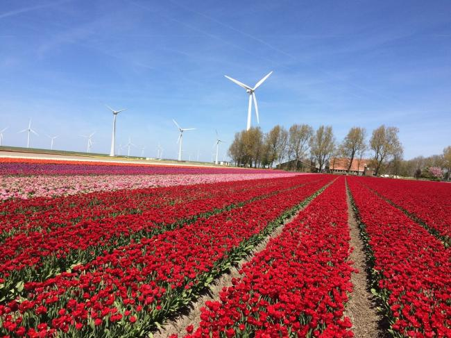 Vries meest voorkomende achternaam in Flevoland