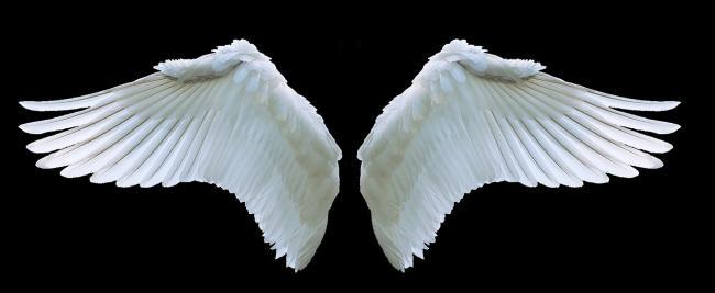 Overheid stelt 10 miljoen beschikbaar voor Business Angels