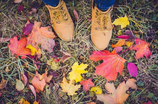 Deze herfst wordt een seizoen vol reflecteren, wandelen en vooruitwerken.