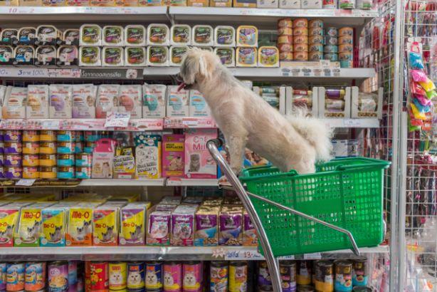 De online vindbaarheid van dierenwinkels kan beter