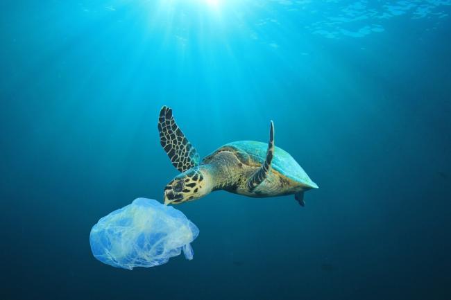 Verbod op wegwerpplastic
