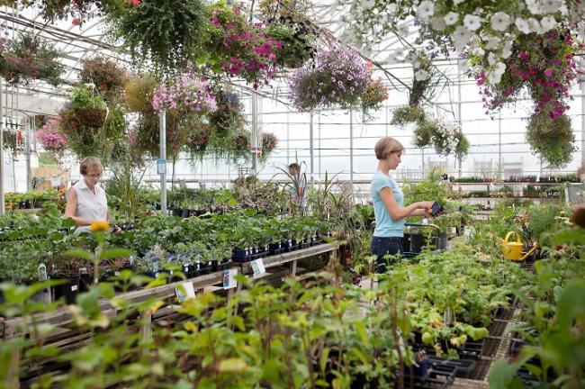 De vraag naar tuinplanten stijgt: zijn de tuincentra online klaar voor meer bezo
