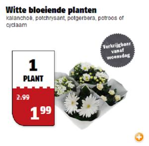 witte bloeiende planten