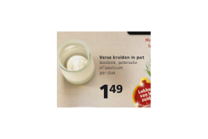 verse kruiden in pot
