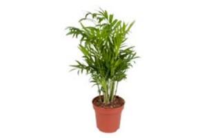 grote groene planten