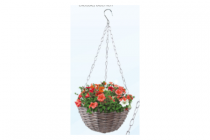 action hanging basket