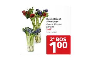 hyacinten of anemonen