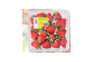 attent aardbeien