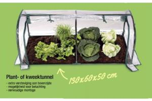 plant  of kweektunnel