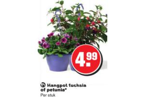 hangpot fuchsia of petunia