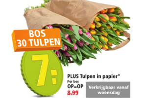 plus tulpen in papier