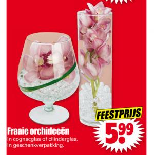 fraaie orchideeen