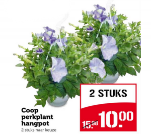 coop perkplant hangpot