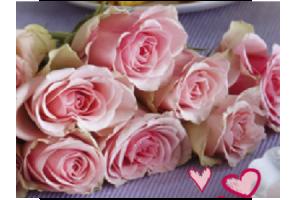 rozen bij jan linders