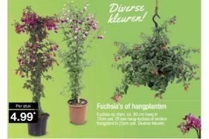 fuchsias of hangplanten
