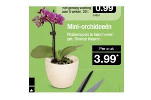 mini orchideeen