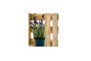 lavendel hidcote of stoechas