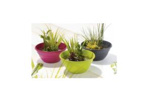 terrasvijver voor op terras of tuintafel grijs roze groen of taupe incl. waterplanten