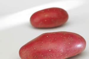 franceilne charlotte of jazzy aardappelen