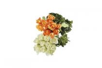 hoogvliet rozen