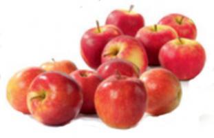 elstar appels
