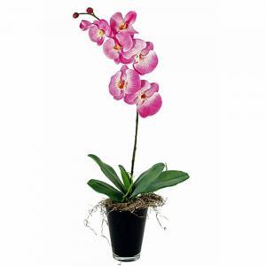 orchidee phalaenopsis 1 takker