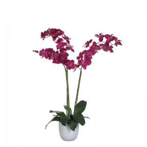 coop orchidee 2 takker