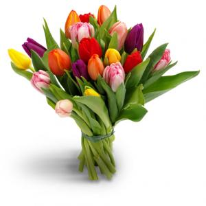 coop tulpen