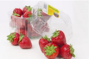 driscolls hollandse aardbeien