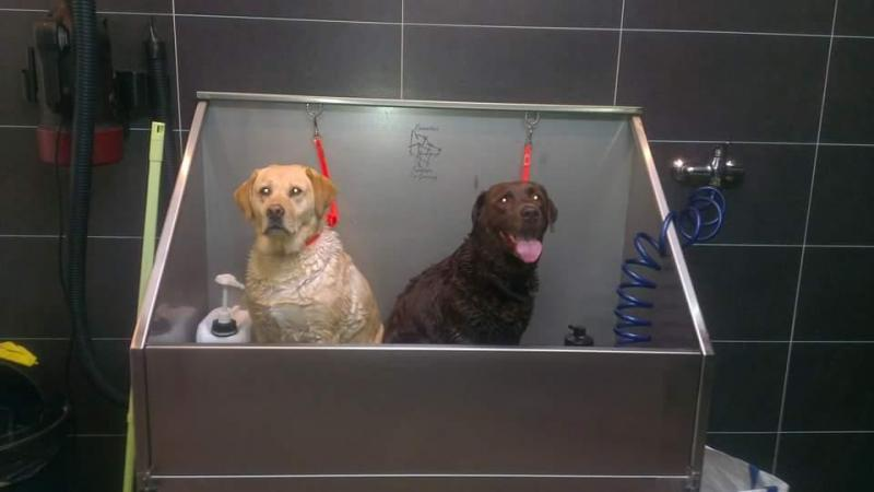 Labradors lekker in bad