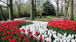 tour-Keukenhof gardens