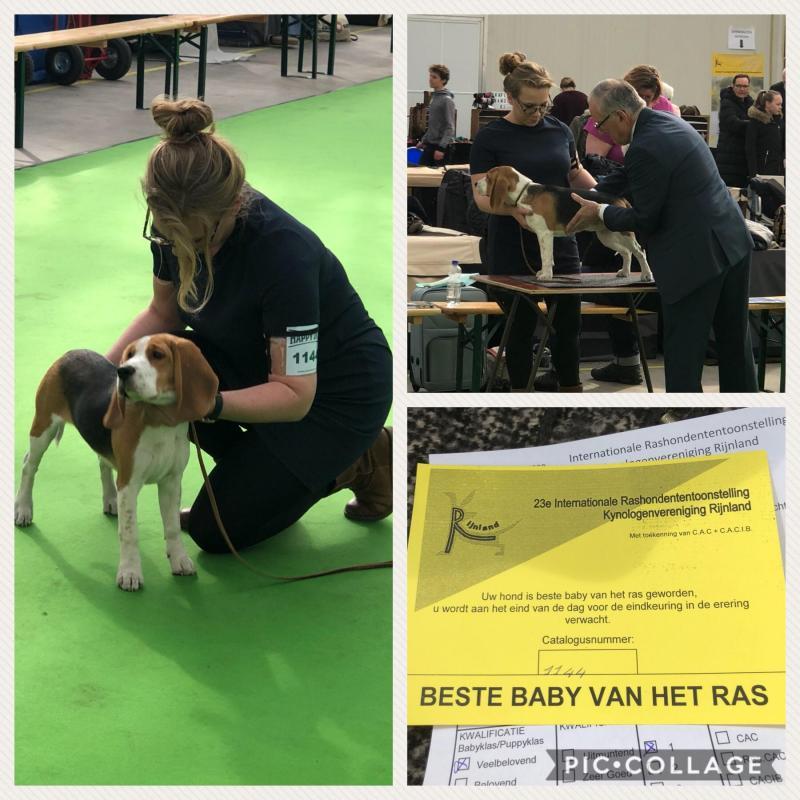 Int. Nationale Dogshow KV Rijnland 2018, VB 1e! Beste baby van het ras