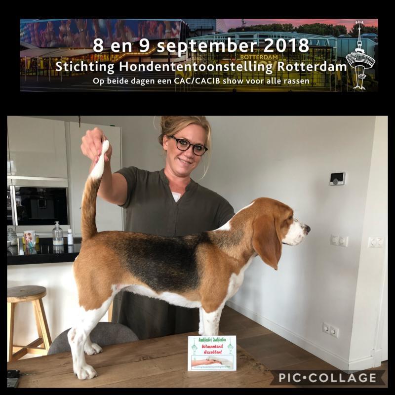 Int. Nationale Dogshow Rotterdam 2018, U 3e plaats jeugdklasse teven