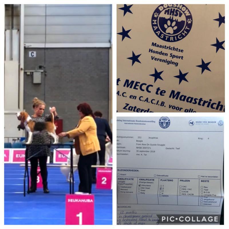 Int. Nationale Dogshow Maastricht 2018, U 2e plaats jeugdklasse teven